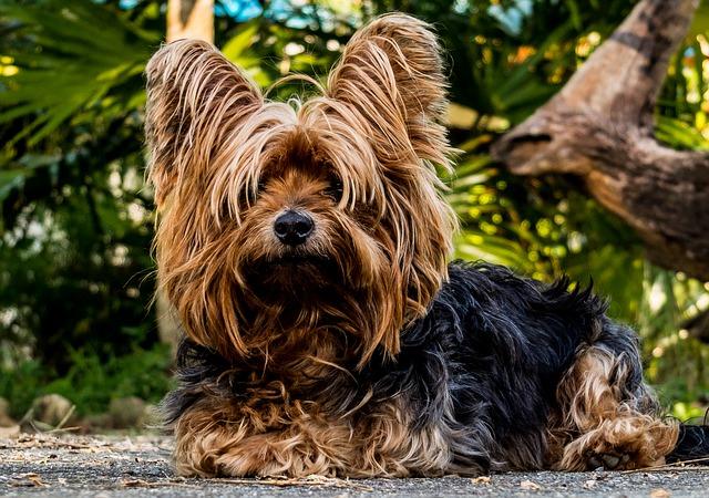 Ein sehr süßer Hund