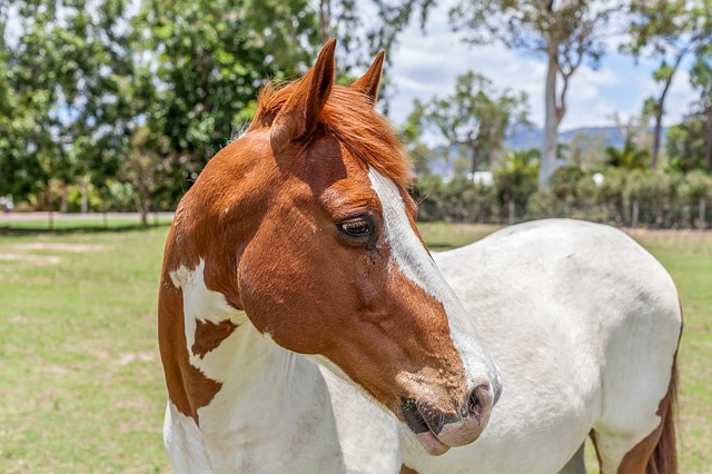 Vollblut Pferd Foto